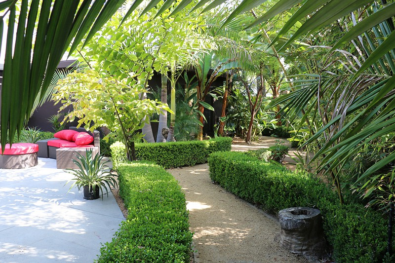 Backyard with hedge and ferns.